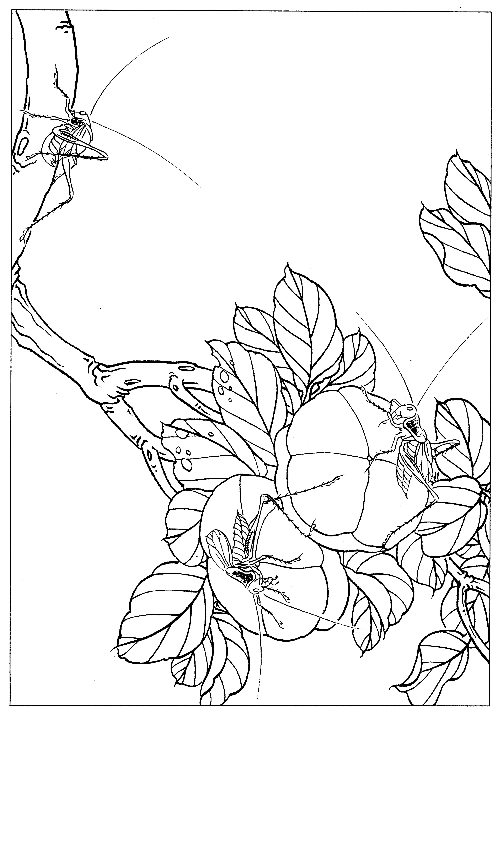 工笔画素材《虫草白描图》