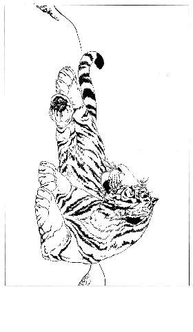 工笔画素材《虎白描图》0034作品欣赏