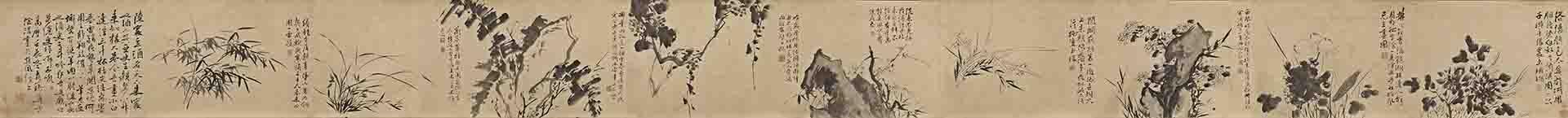 明 徐渭 墨花九段图卷纸本23x316