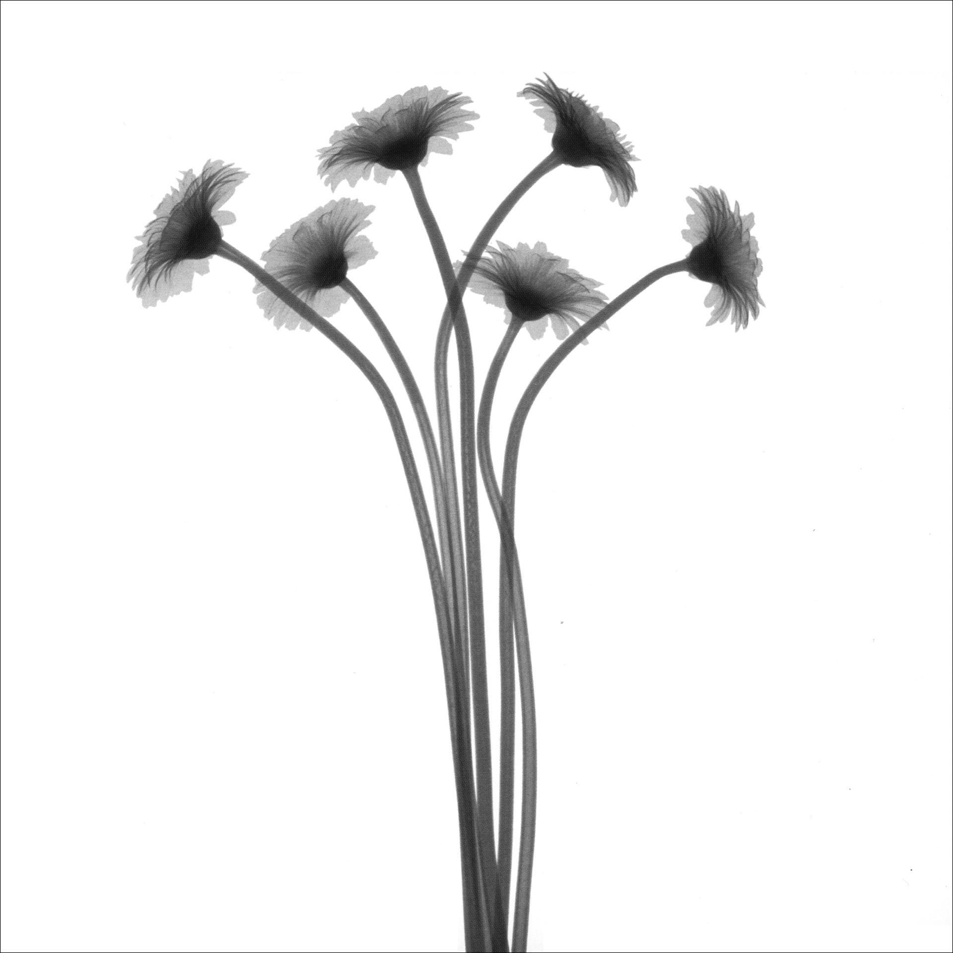 白灰花卉三联画