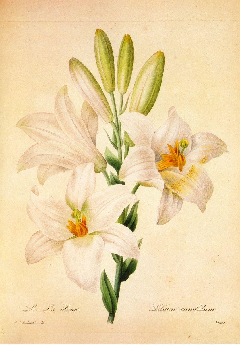 0106_装饰画花卉喷绘素材图JPG格式竖_10088__4_