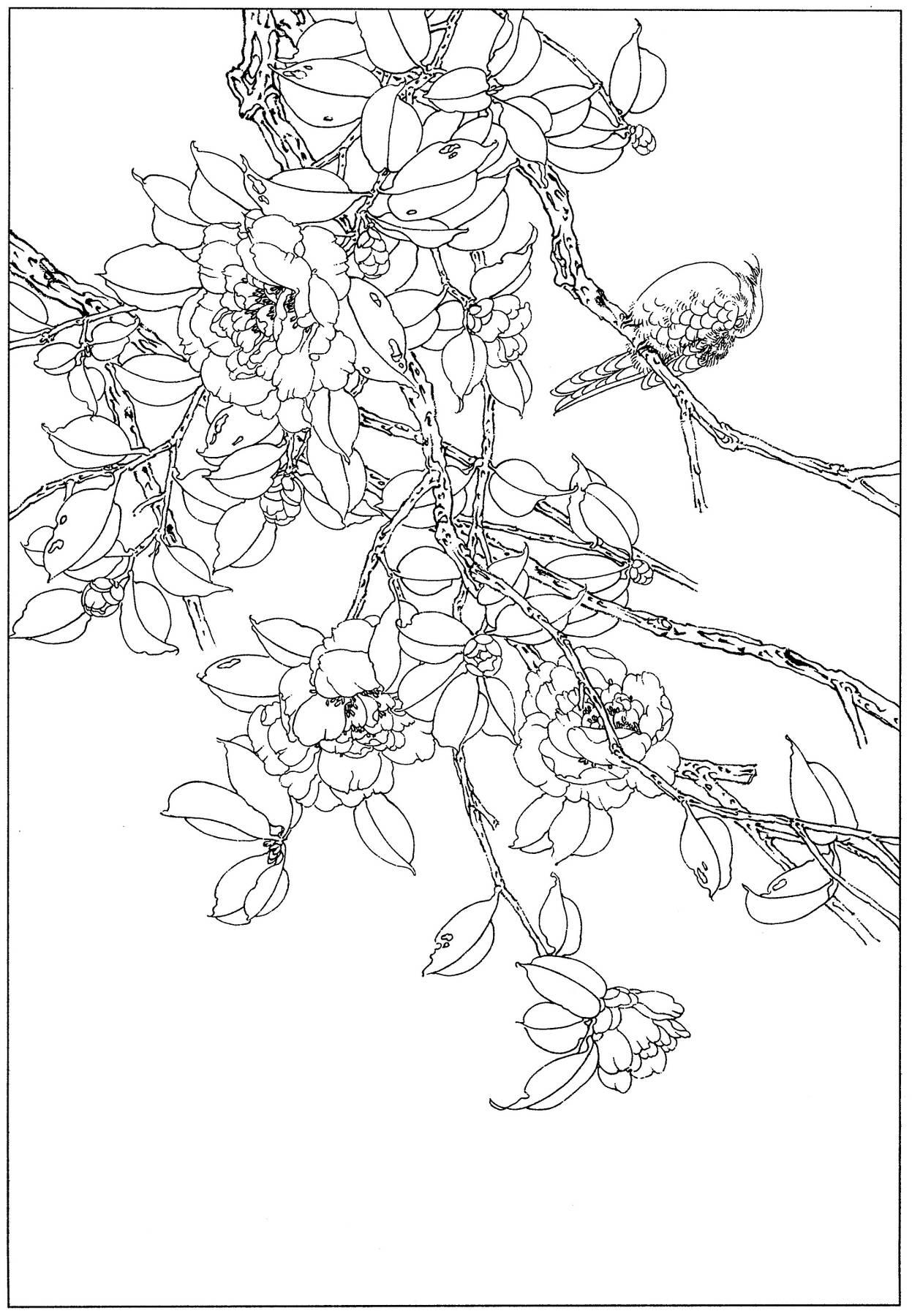 0034_工笔画茶花白描线稿素材高清图_0x0px_jpg_600dpi_3