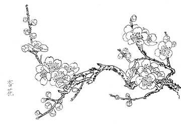 0020_工笔画春夏花卉白描线稿素材高清图杏花_0x0px_jpg_600dpi_3