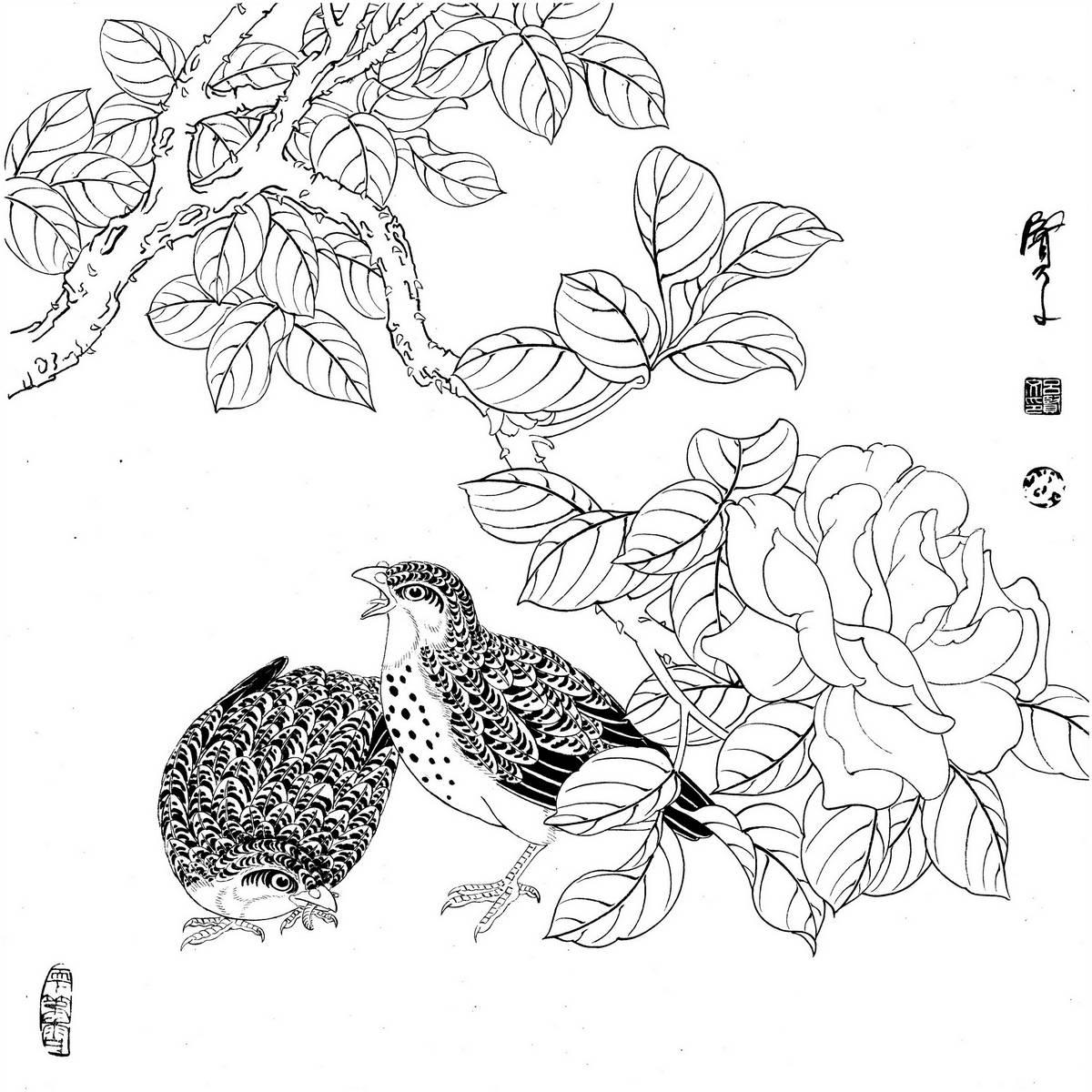 0024_工笔画花鸟白描线稿素材高清图24_0x0px_jpg_600dpi_3