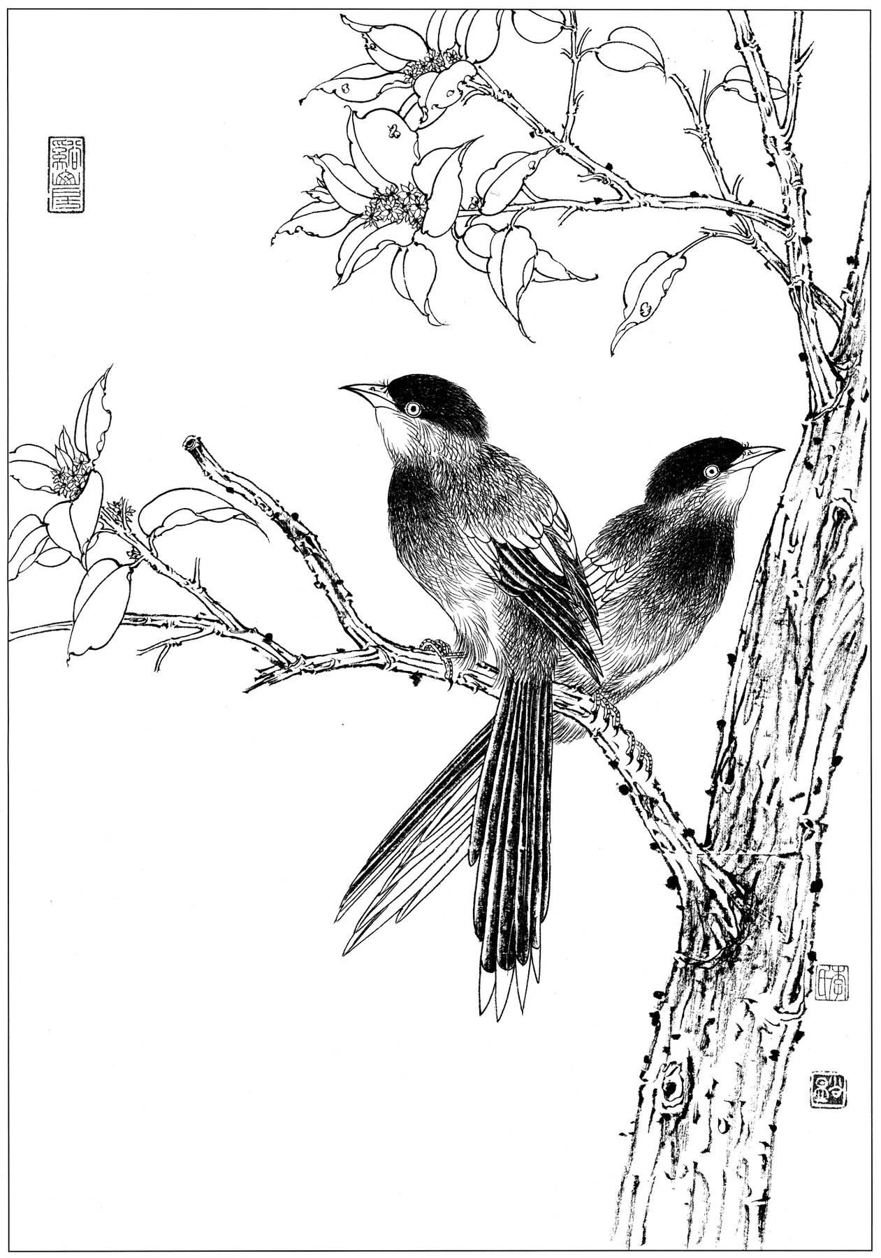 0137_工笔画花鸟白描线稿素材高清图灰喜鹊_0x0px_jpg_600dpi_3