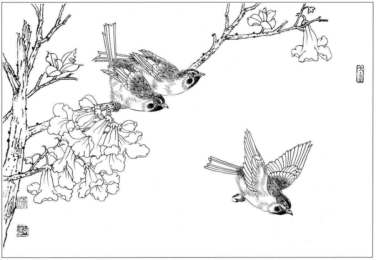 0142_工笔画花鸟白描线稿素材高清图麻雀1_0x0px_jpg_600dpi_3