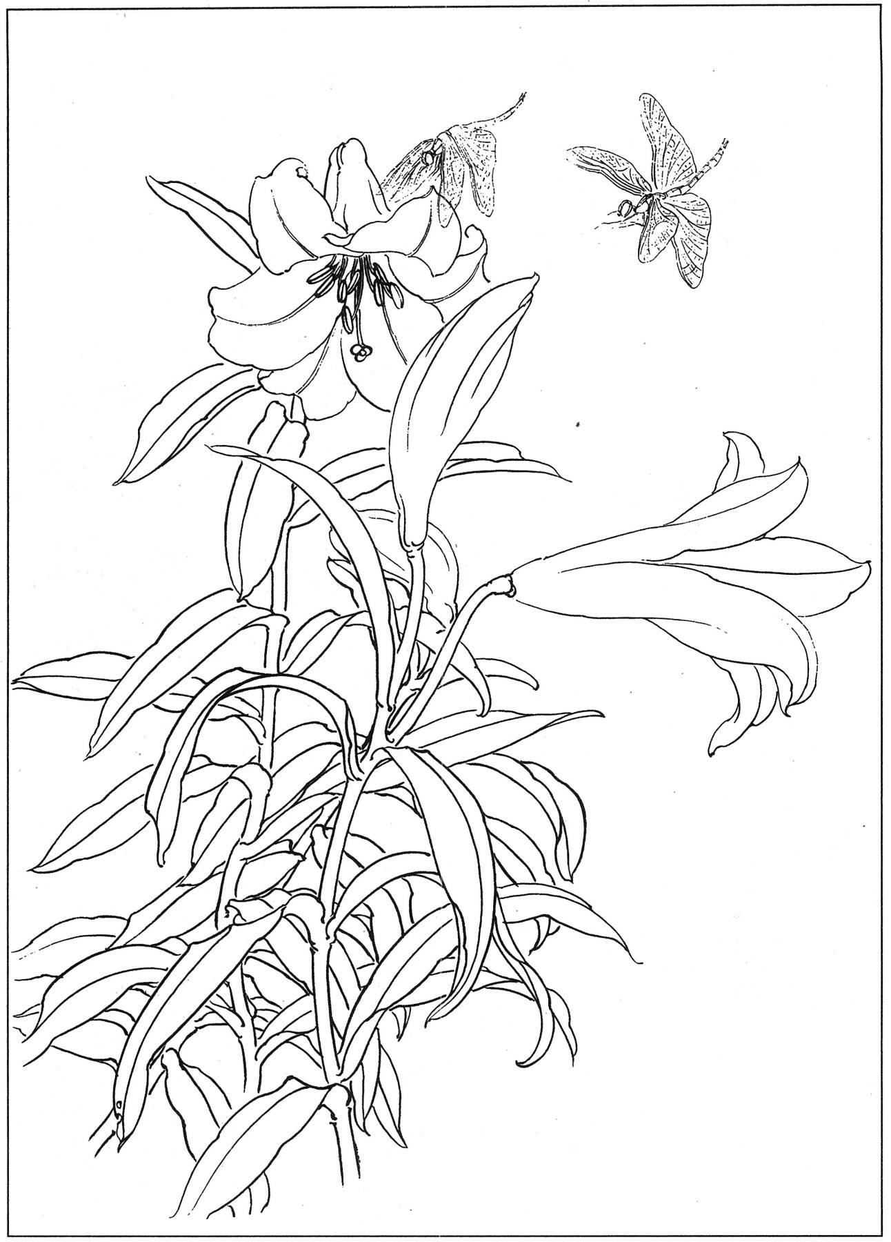 0010_工笔画百合白描线稿素材高清图-百合10_2810x4100PX_JPG_300DPI_2.2