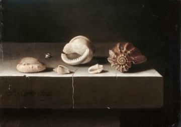 0041_柯尔特_Adriaen Coorte —— Six shells on a stone slab_3662x2573PX_TIF_72DPI_27_0