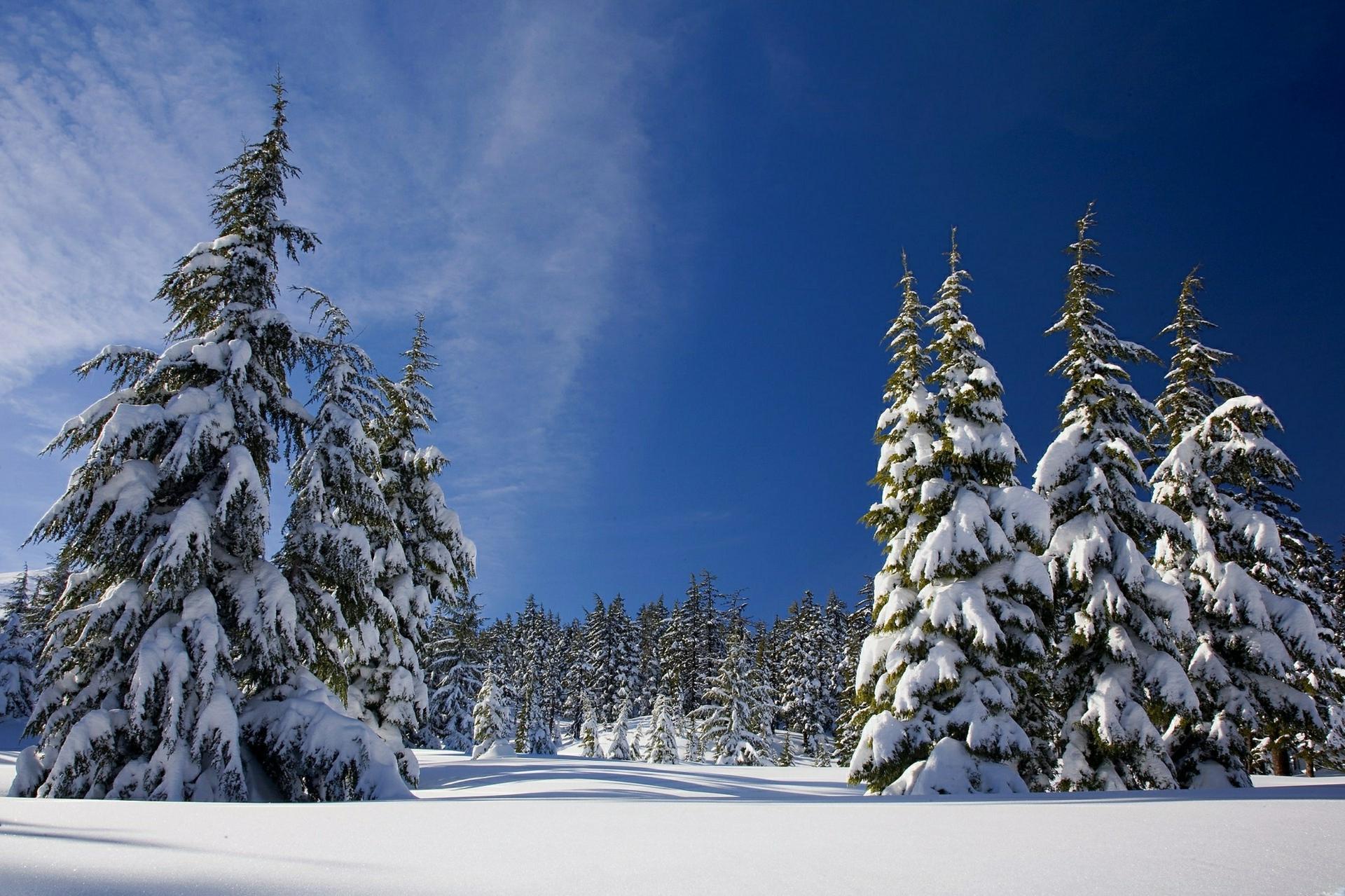 0138_冬天主题_冬天主题高清图01-cold-forest-ice-259708_2200x1466PX_TIF_72DPI_9.4_0_sdxco.cn