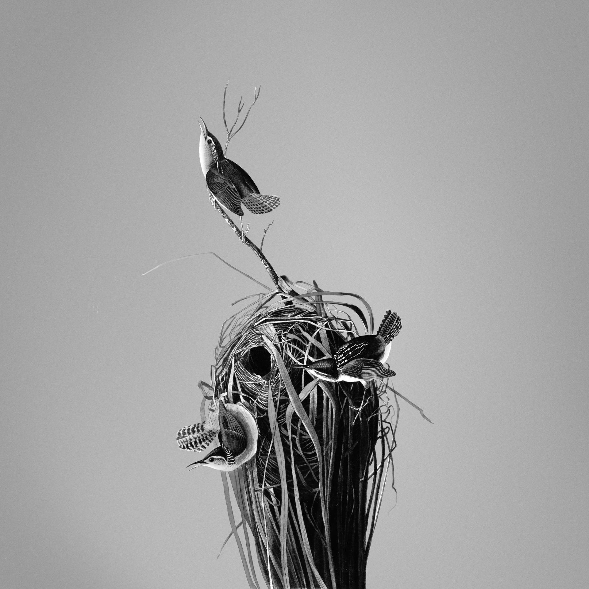 0006_现代装饰_现代装饰画调色版图集TIF-黑白鸟巢(去英文字)_7584x7584PX_TIF_150DPI_56_0